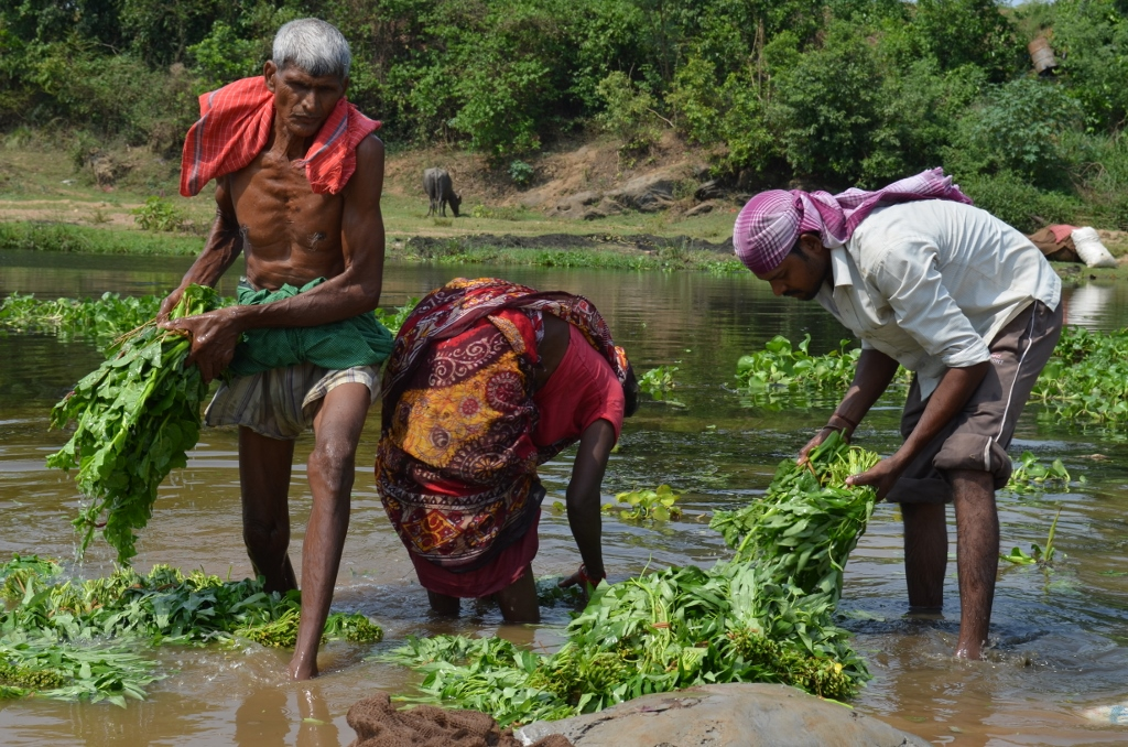 Leafy vegetables being washed in the Gurra river where Uranium waste is released. These vegetables are sold in local markets and even in places free from nuclear contamination. | Photo: Ashish Birulee