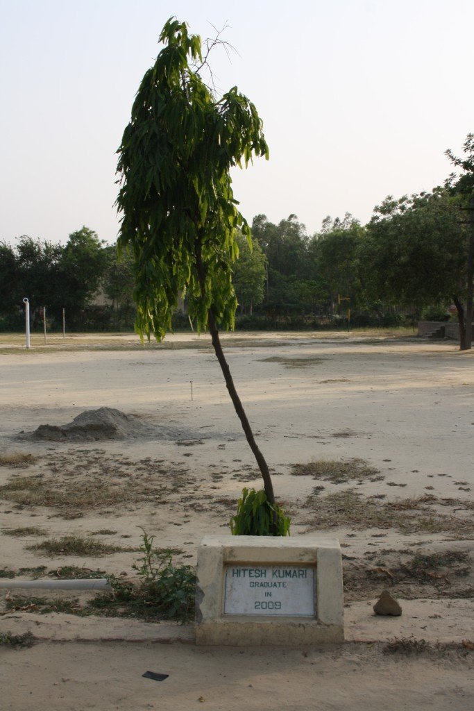 a sapling planted by a student1