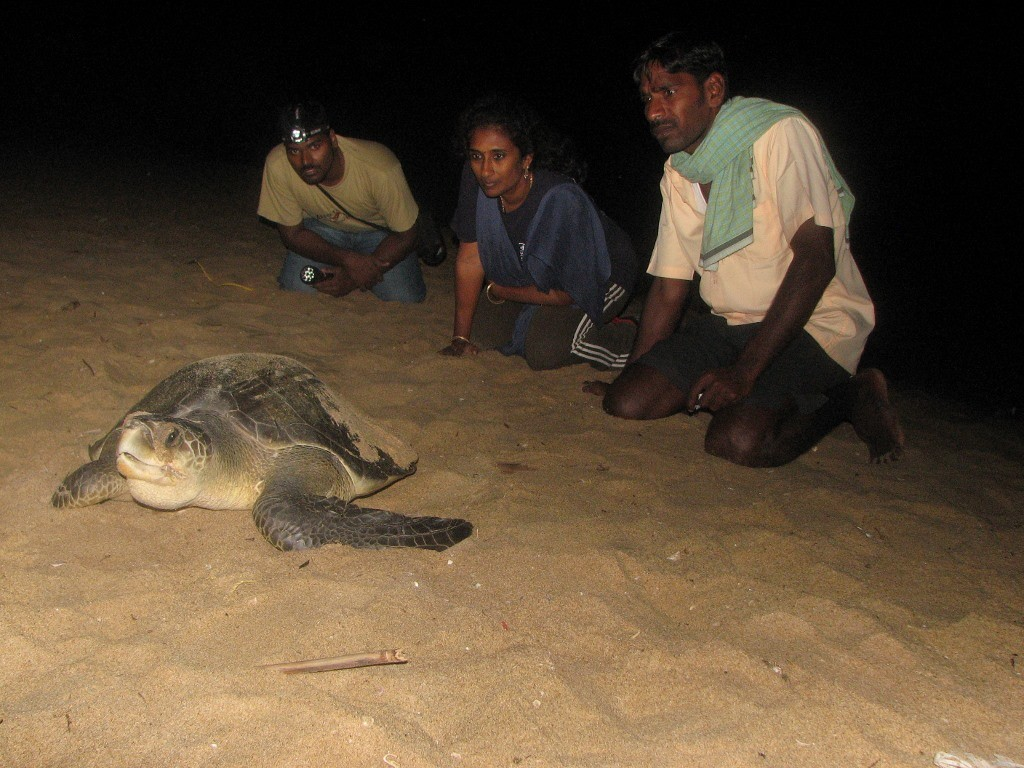 Members of Supraja Dharini's protection group keeps a watch on a nesting turtle. (Credit: Hema Vijay\WFS)
