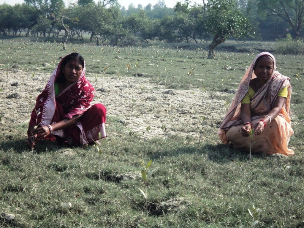 Groups of women across several remote villages in the Sundarbans Delta of South 24 Paraganas in West Bengal have added one more task to their long list of daily chores - they now plant mangrove saplings. (Credit: Saadia Azim\WFS)