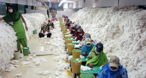 Manually decontaminating cotton before processing at an Indian spinning mill (2010) | Photo: CSIRO via Wikimedia Commons
