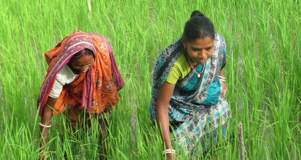 There is very little data on women's ownership of land and assets even though it is an area that is very significant, particularly because it is inter-twined with many other dimensions of women's lives. (Credit: Subhrajit Dutta Mallick\WFS)