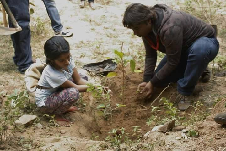 "Bengaluru's Tree Doctor : saving the ""Garden City"" one tree at a time"